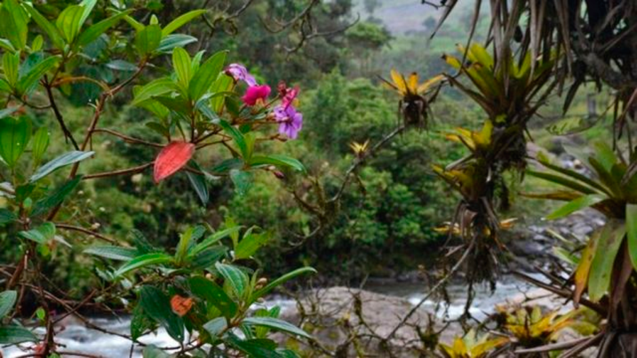 Ecuador: científicos descubren, gracias a un bosque tropical, la historia de un pueblo indígena masacrado