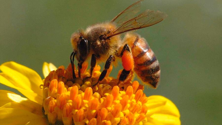 El polen de las flores podría ayudar en la construcción de hábitats del pasado