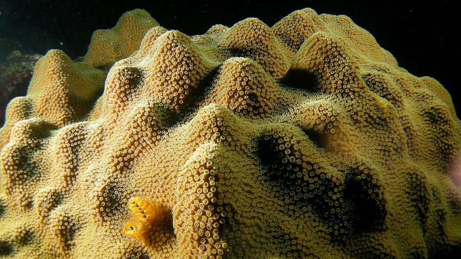 Hay corales preparados para soportar el cambio climático