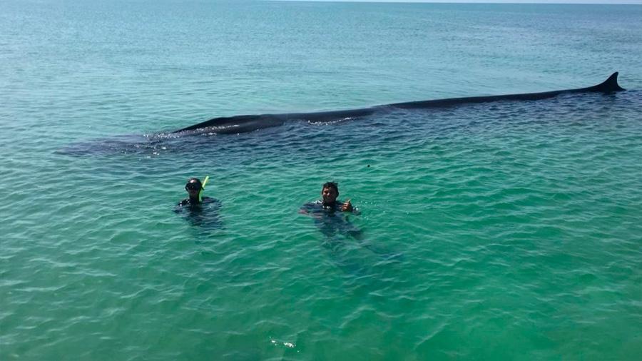 La espectacular ballena de 18 metros rescatada en una playa de México