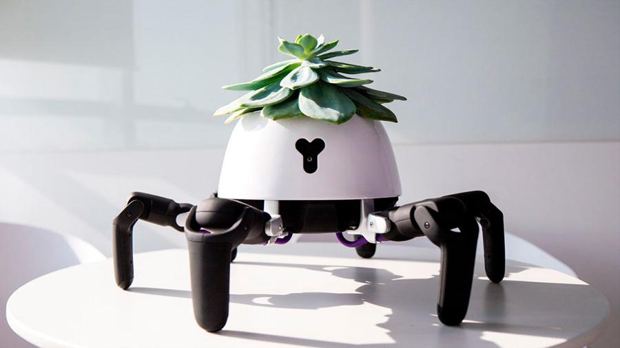 Este robot cuida de tu planta cuando te vas de vacaciones