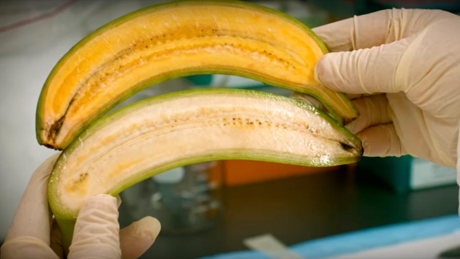 """Empresa obtiene licencia para modificar alimentos con """"tijera molecular"""""""