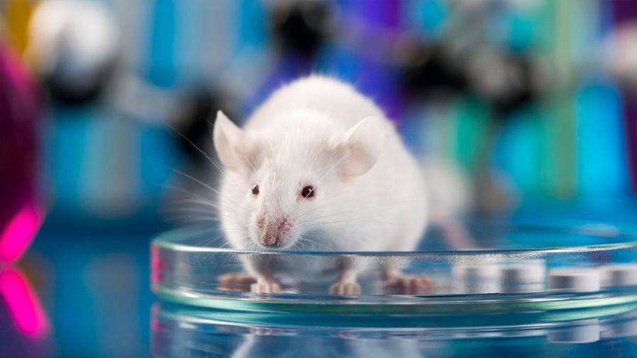 Desarrollado un fármaco probado en ratas que disuade de consumir alcohol