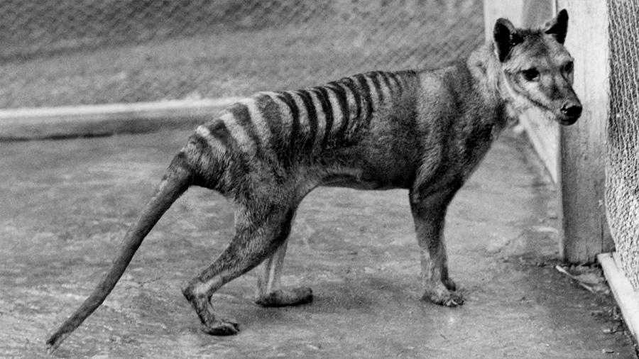 Presentan Primer atlas de mamíferos vivos y extinguidos por los humanos