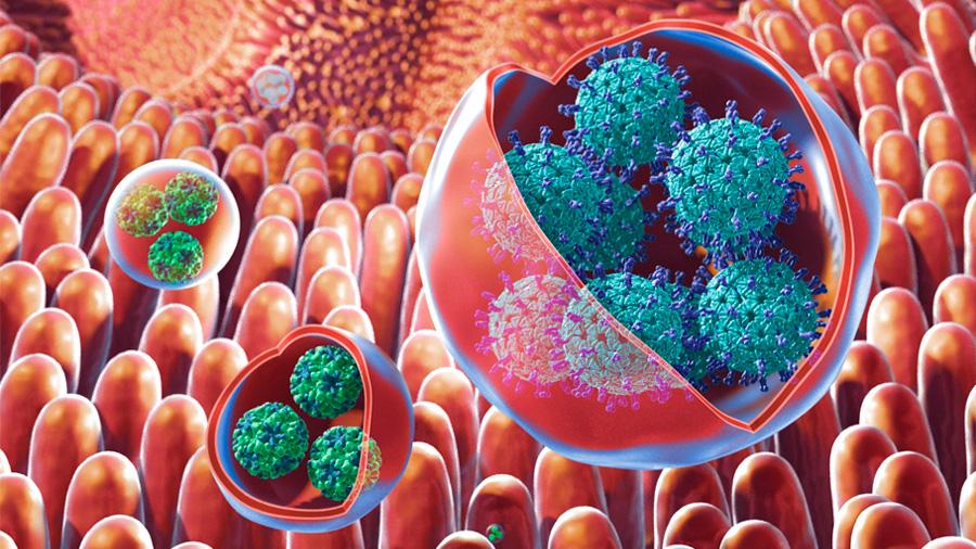 """Descubren que algunos virus entéricos actúan como """"caballos de Troya"""""""