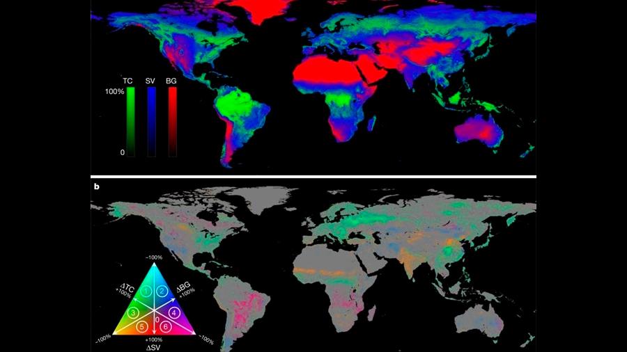 Hay más bosques en la Tierra ahora que hace 35 años