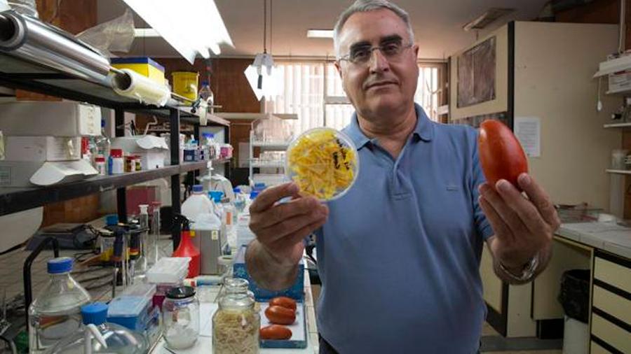 Investigadores españoles crean múltiples envases biodegradables vía desechos de muchos alimentos