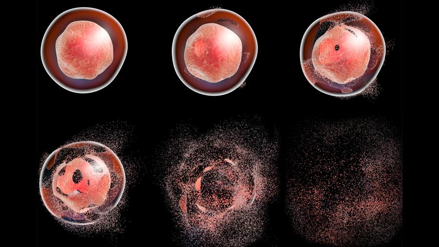Científicos logran descubrir a qué velocidad ocurre la muerte celular