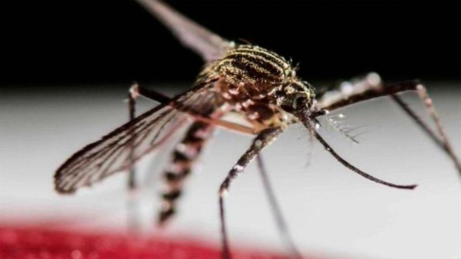 Los mosquitos deshidratados pican con mayor frecuencia