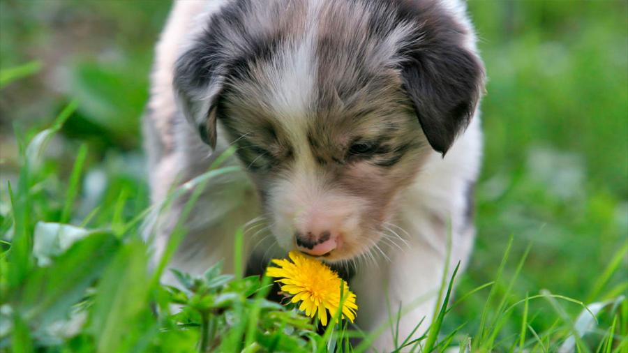 Descubren nuevos y sorprendentes detalles sobre cómo se desarrolla el sentido del olfato