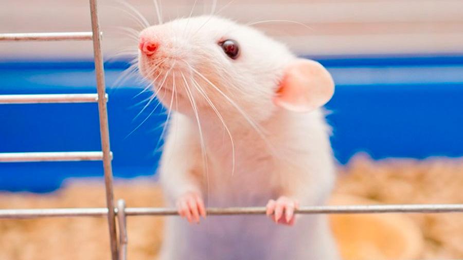 Chilenos trabajan en retina computacional capaz de imitar el ojo de un roedor