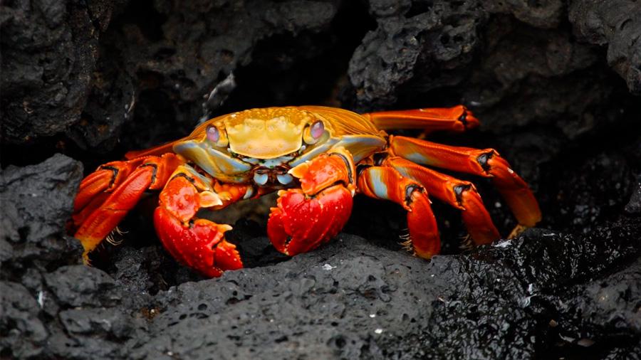 El sistema inmunitario de los crustáceos: su mejor aliado para combatir enfermedades