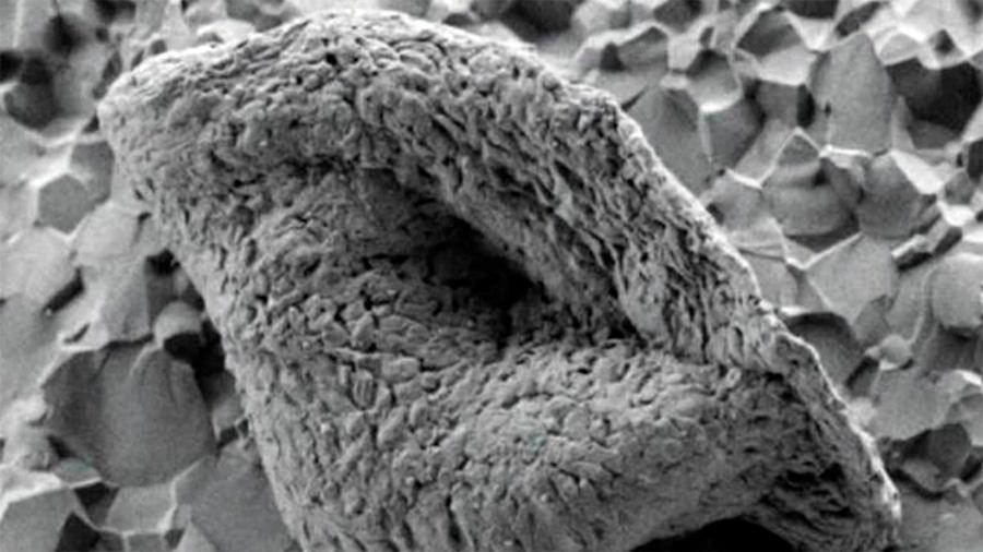 Descubren los microfósiles más antiguos jamás vistos en la Tierra