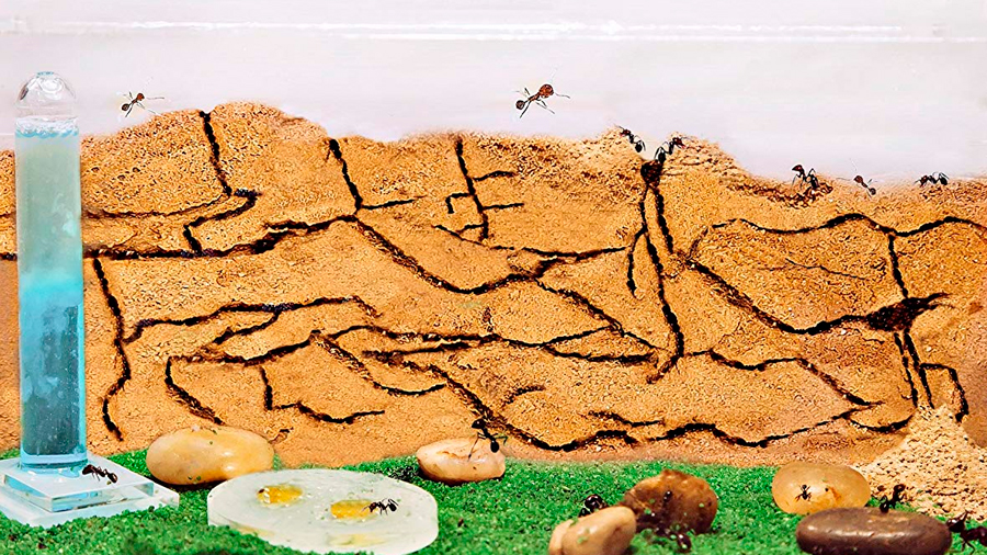 Observan cómo emular túneles que excavan hormigas para mitigar atascos de tráfico
