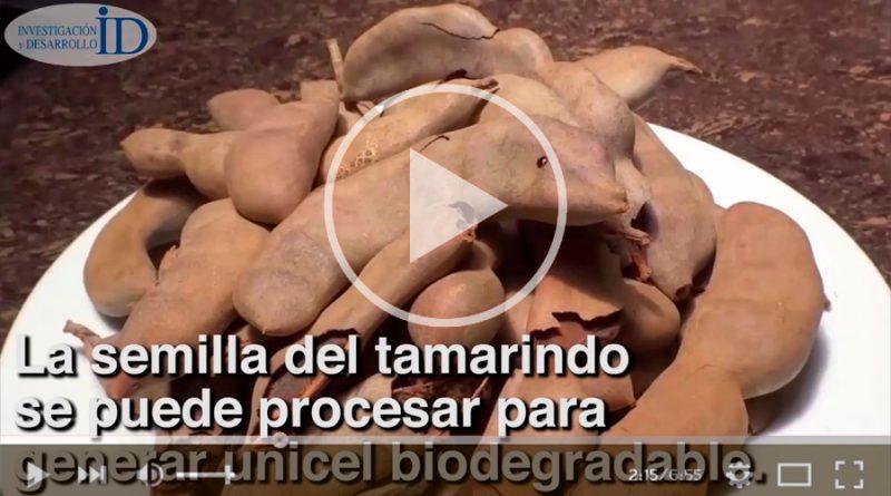 Crean científicos de la UNAM posible sustituto de unicel a partir del tamarindo