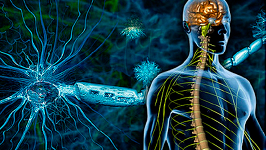 Descubren un nuevo subtipo de esclerosis múltiple