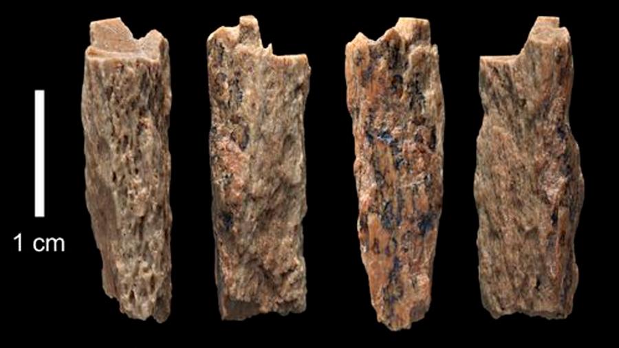 Hallan restos de una hija de dos especies humanas distintas: una Neandertal y un Denisovano