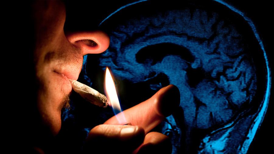 Consumir marihuana hace a tu cerebro tres años más viejo, postula estudio científico