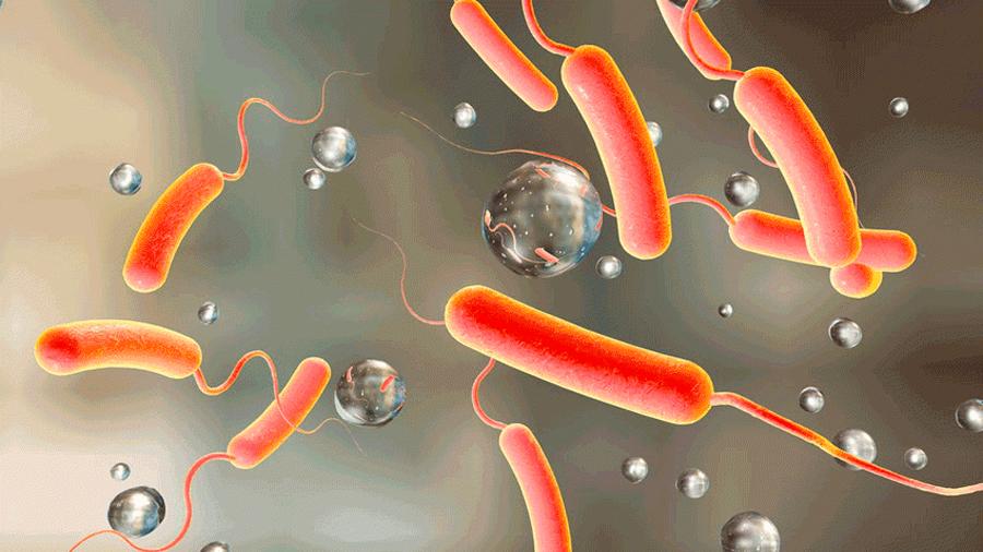 Cómo sobrevive la bacteria del cólera a sus depredadores