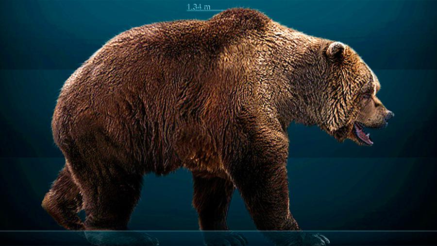 Científicos descubren que el oso pardo tiene ADN del extinto oso cavernario