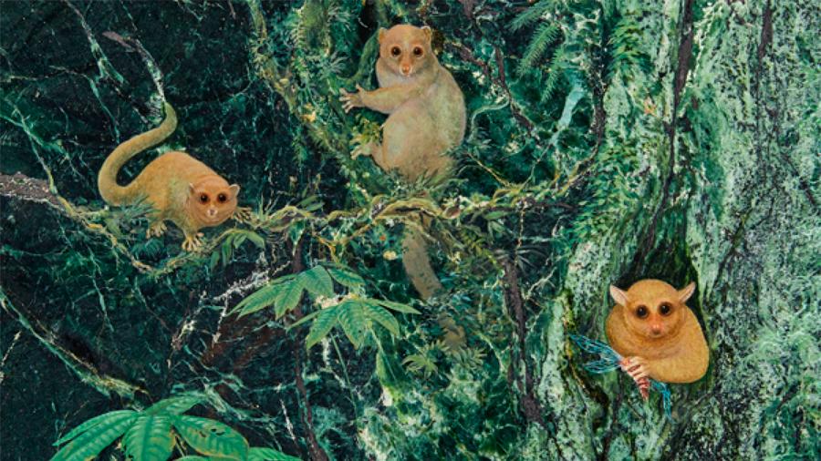 Descubren tres nuevas especies de primates, extintos hace 40 millones de años: pesaban menos de un kg