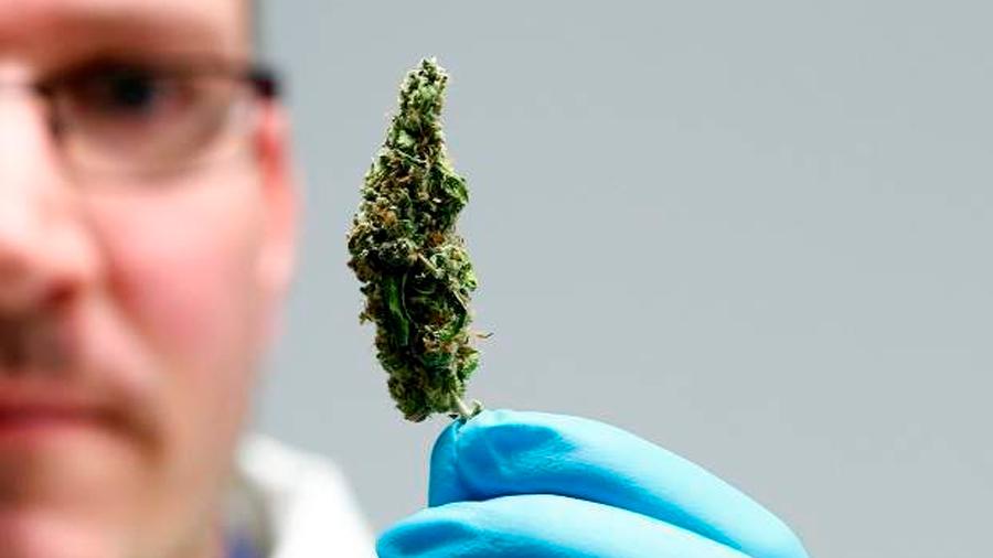 Científicos descubren cómo un componente del cannabis puede combatir la psicosis