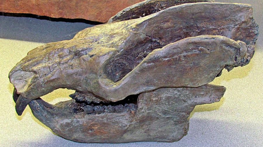 Descubren los fósiles de un mamífero de hace 184 millones de años con 38 crías
