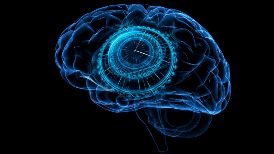 Descubren una red de células que tienen un papel clave en cómo se experimenta el tiempo