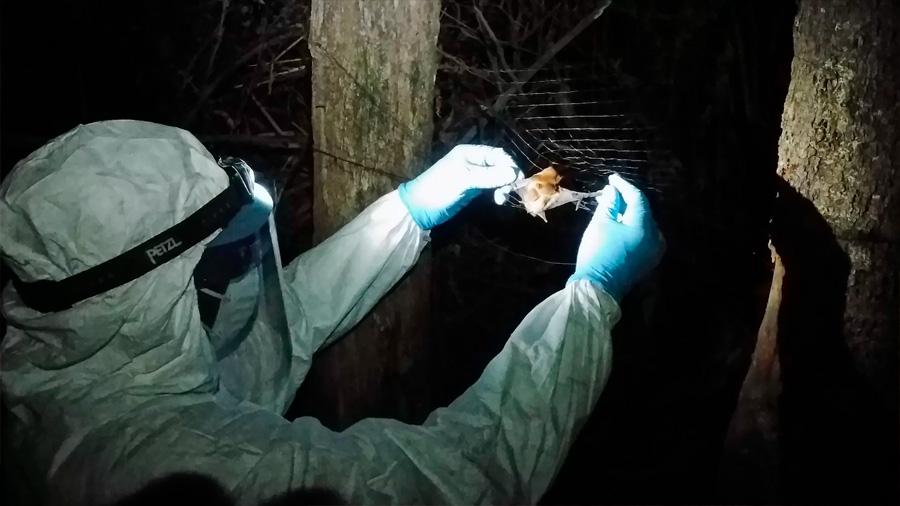 Científicos descubrieron un nuevo virus del Ébola en murciélagos