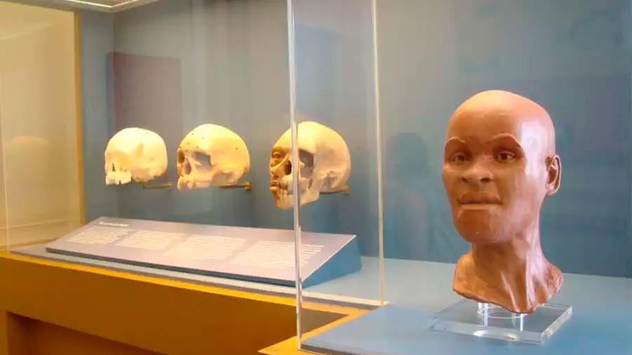 Al parecer hallaron el cráneo del fósil más antiguo de Sudamérica en los restos del Museo de Brasil