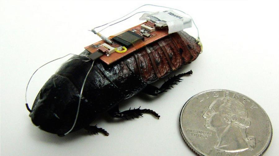 Biobots: la cucaracha cyborg que podría salvarte la vida en un futuro