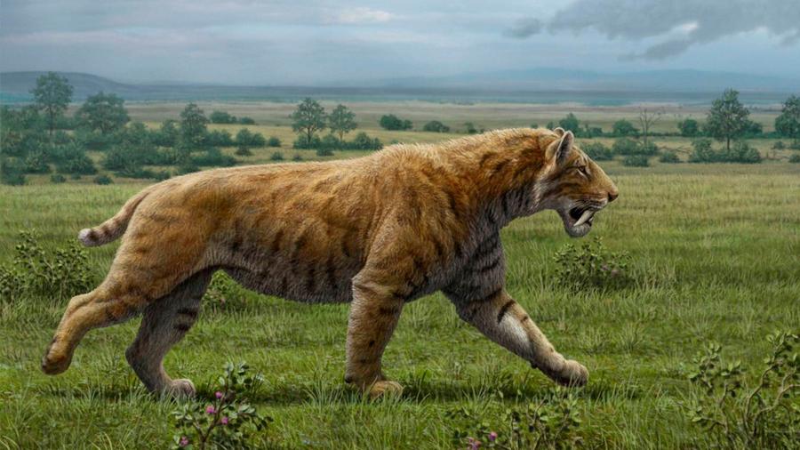 Descubren huellas de un tigre dientes de sable que data de hace 30 mil años en localidad de Buenos Aires