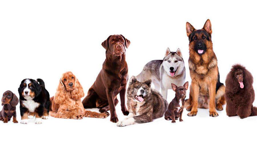 La historia de dos amigos: la evolución del perro junto al hombre