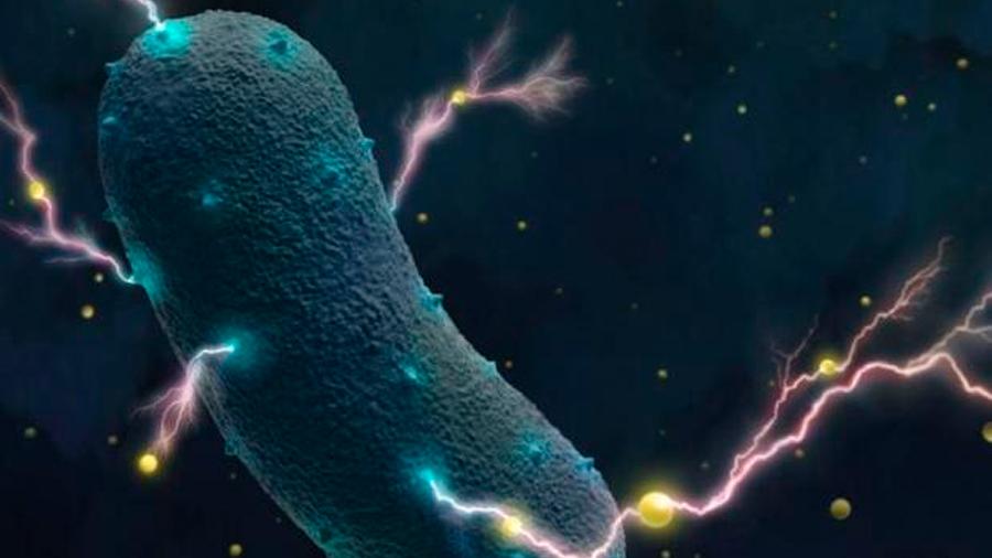 Confirmado: las bacterias de tu intestino producen electricidad
