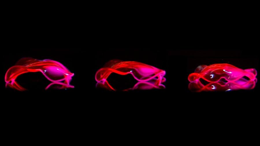 Nuevos hidrogeles emulan los movimientos complejos de los seres vivos