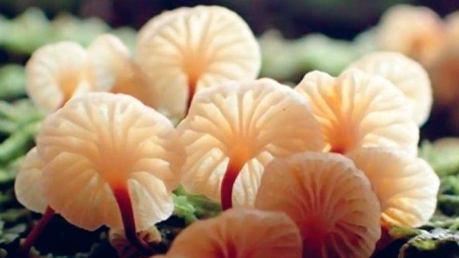 Investigadores reclaman para los hongos igualdad respecto al trato de animales y plantas