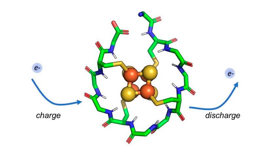 Identifican un péptido que pudo existir en el amanecer de la vida