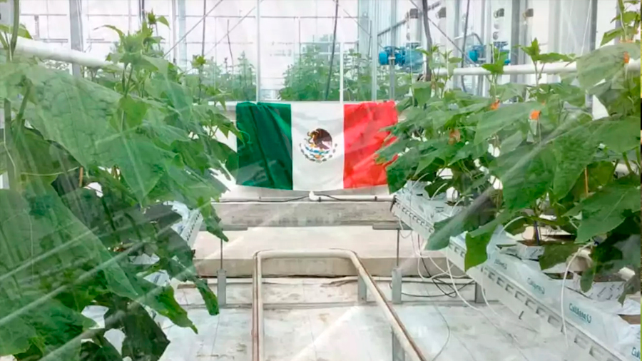 Triunfan mexicanos en competición de tecnología para invernaderos