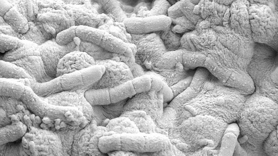 Las bacterias no han cambiado de 'contraseña' en 2,700 millones de años