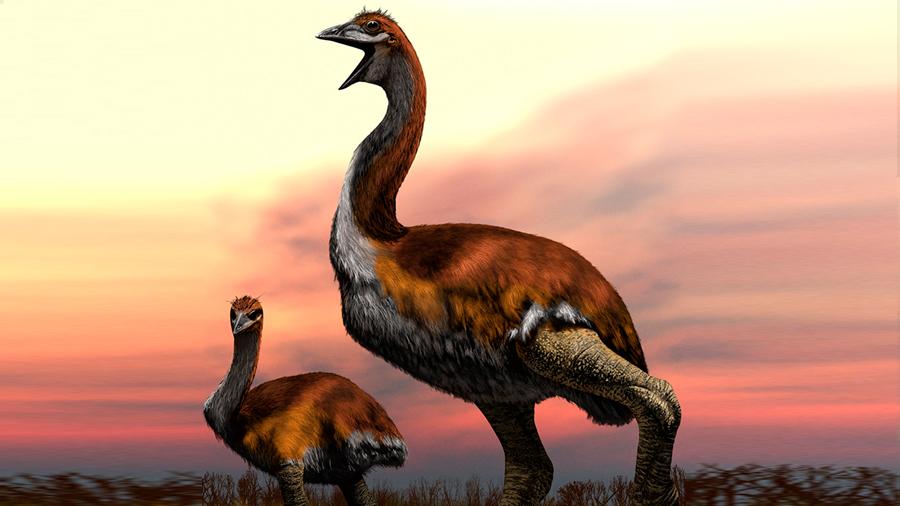 Así fue Vorombe, proclamada el ave más grande de la historia