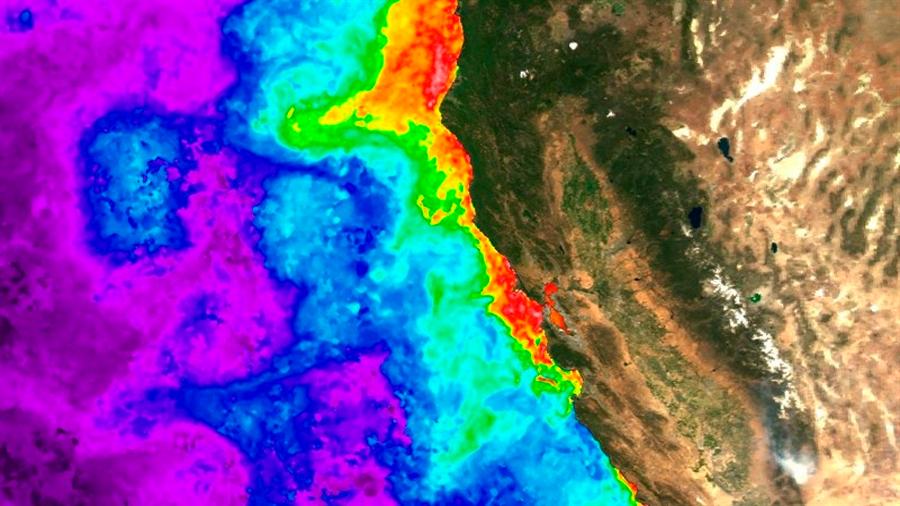 Solución al misterio de las toxinas en las mareas de algas que asolan costas de todo el orbe
