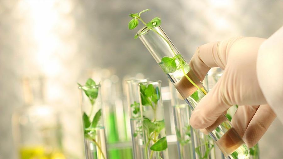 Justicia europea: organismos de plantas modificados genéticamente con CRISPR deben ser regulados como transgénicos