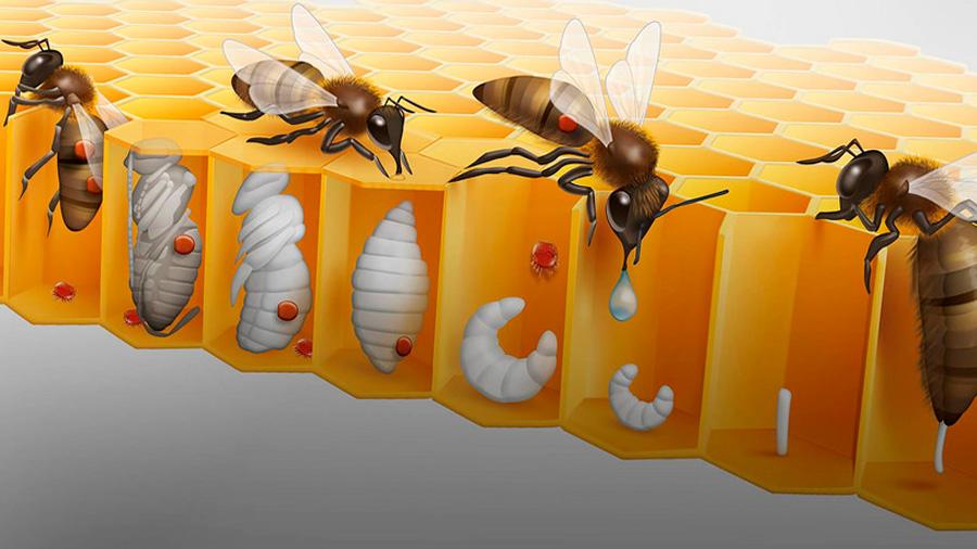 Poblaciones de abejas y su polinización han disminuido en forma alarmante, advierten científicos