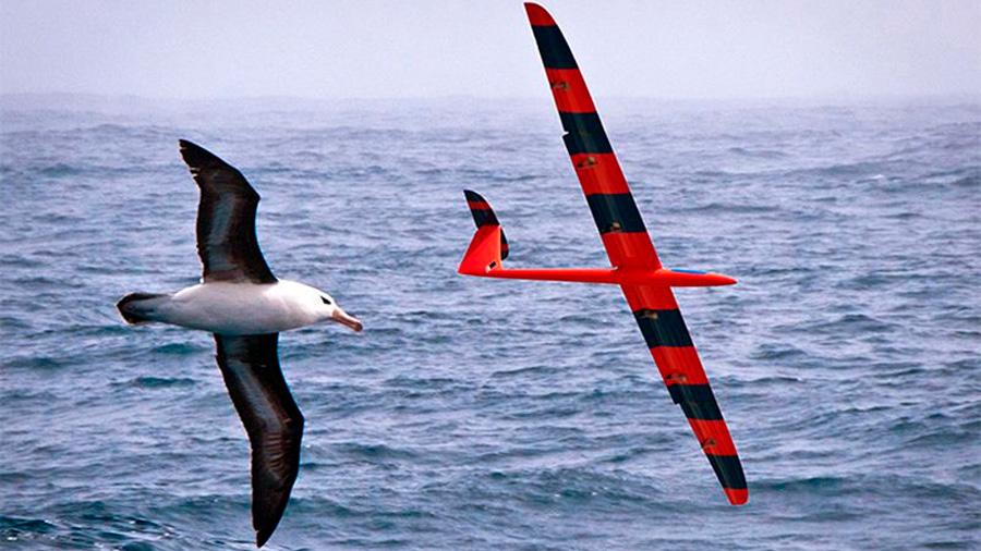 Drones entrenándose para planear como pájaros