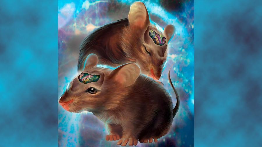 Descubren como mantener joven el cerebro eliminando las células más viejas