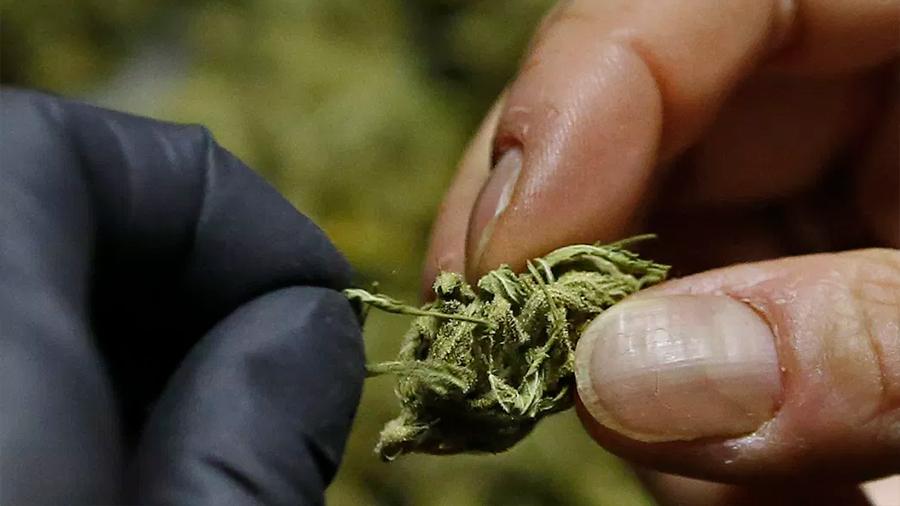 Una dosis diaria de marihuana en la vejez podría prevenir la demencia, según estudio en Nature Medicine