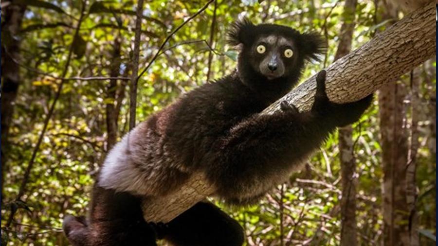 Los mamíferos, sin margen evolutivo ante la sexta extinción masiva