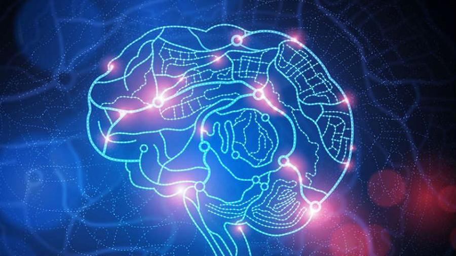 Descubren cómo se forma el sistema de navegación del cerebro