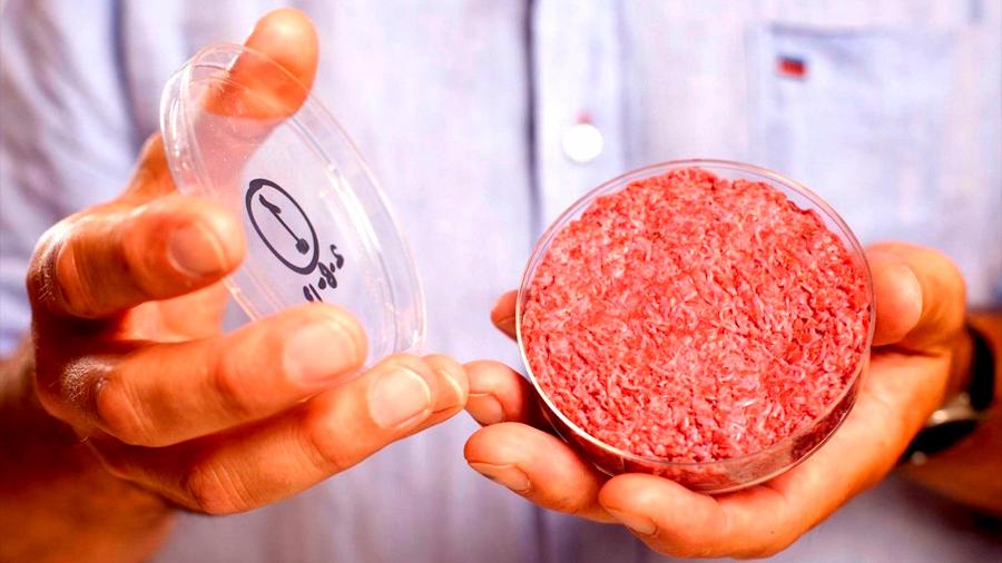 Carne in vitro: una empresa que produce pollo sin matar un solo animal