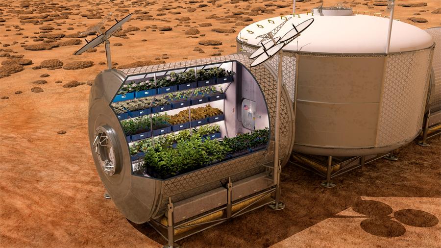 Cultivar en el espacio será posible gracias a una hormona vegetal